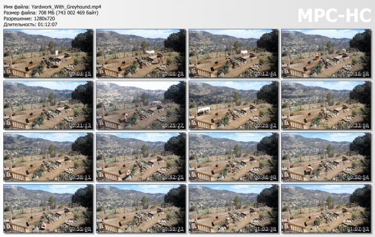 Yardwork With Greyhound.mp4 thumbs 768x485